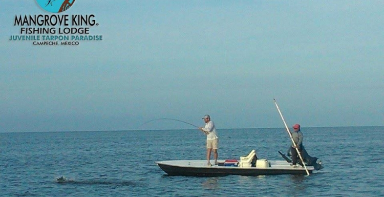 Mangrove King Fishing Lodge, Campeche, la pesca de sabalo de tu vida. (VIDEOS)