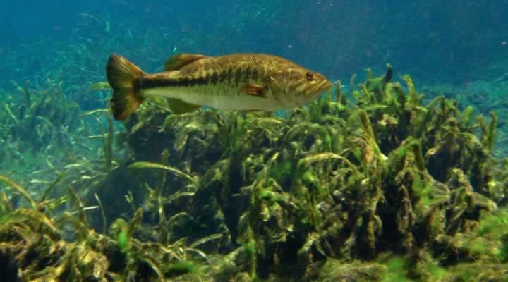 winter-bass-deep-water.jpg