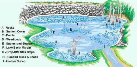 Donde Pescar Estructura Y Cobertura En La Pesca De Lobina