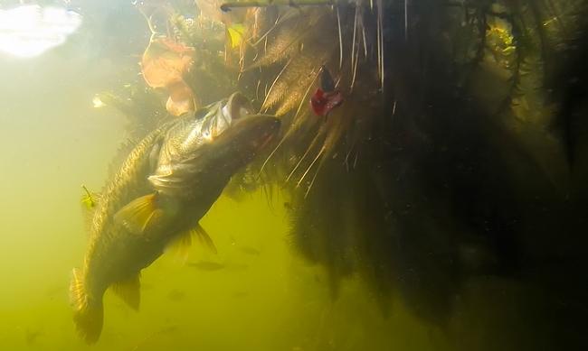 bass-biting-a-punch-bait-under-a-mat.jpg