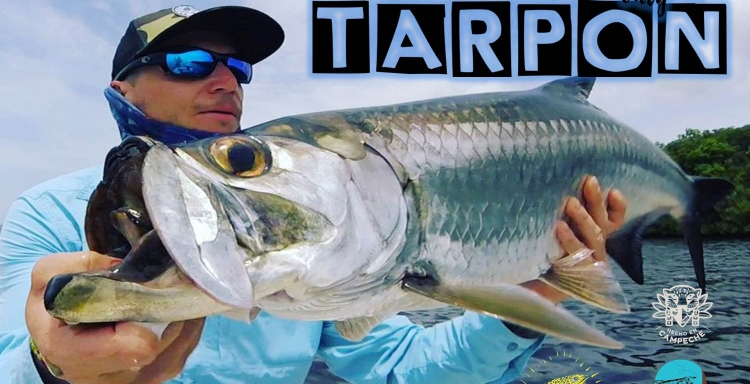ANGLERS TV Tarpon - good vibes only Campeche MX