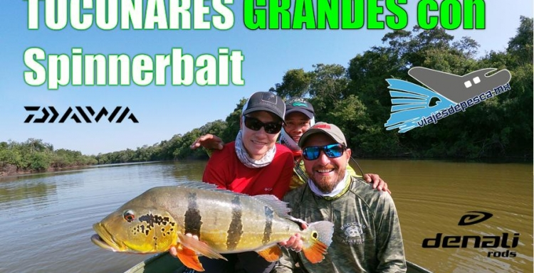 ANGLERS TV PESCANDO GRANDES TUCUNARES CON SPINNERBAIT