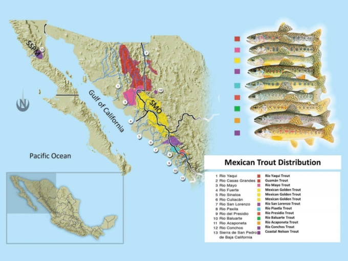 Mexican-trout-complex-distribution-in-northwest-Mexico-at-Sierra-de-San-Pedro-Martir.png