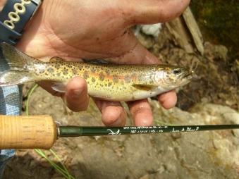 caña yamasaki trucha silvestre donde pescar