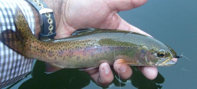 trucha arcoiros donde pescar