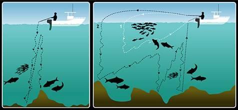 10 Recomendaciones para Pesca Vertical