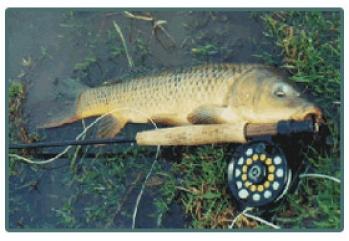 Bonefish de agua dulce