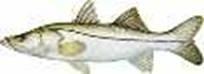 Especies para pesca con mosca