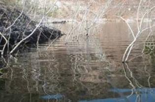 En busqueda del patron de pesca de lobinas