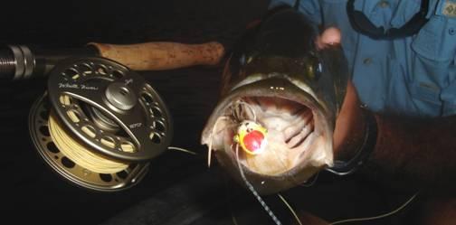 Pescando con Yamasaki