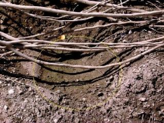 Los nidos del Bass Presa Adolfo Lopez Mateos