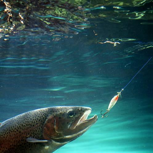 Que tanto sabe usted sobre las lineas de pesca.