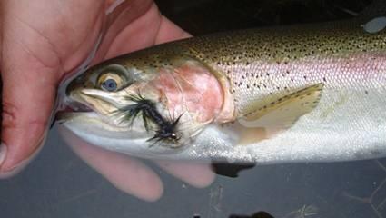 Como pescar en aguas turbias