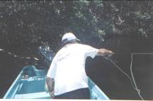 Campeche. Baby Tarpon Junio 2005