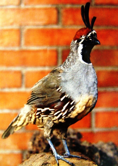 Taxidermia venado plumas aves peces