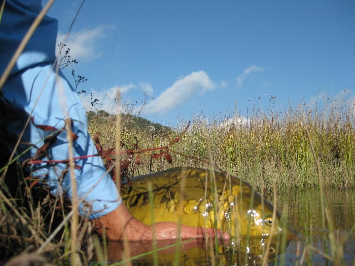 Pescando Carpas con mosca Luis Vargas