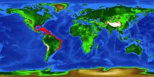 blackgrouperbasemap.jpg