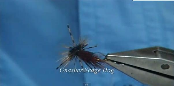 gnasher sedge hog.jpg
