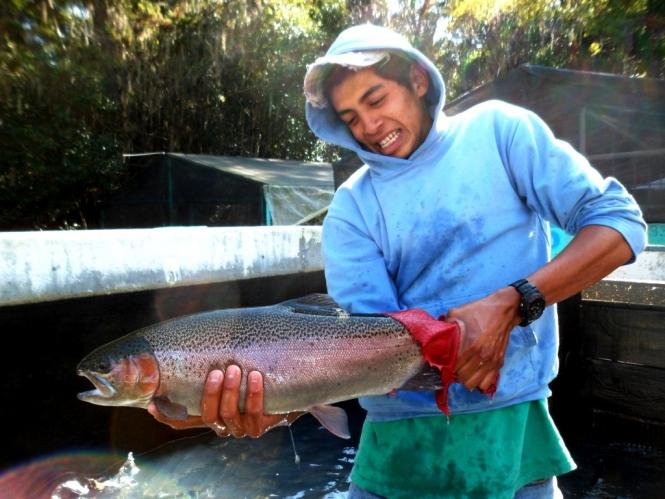 San Miguel Regla Torneo Donde Pescar