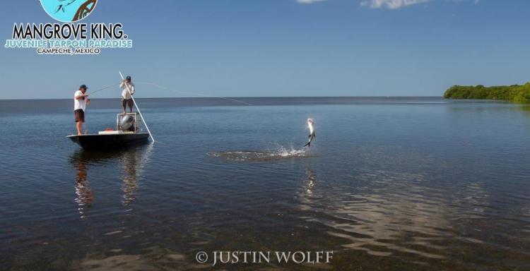Mangrove King, La pesca de fly, no será la misma en Campeche