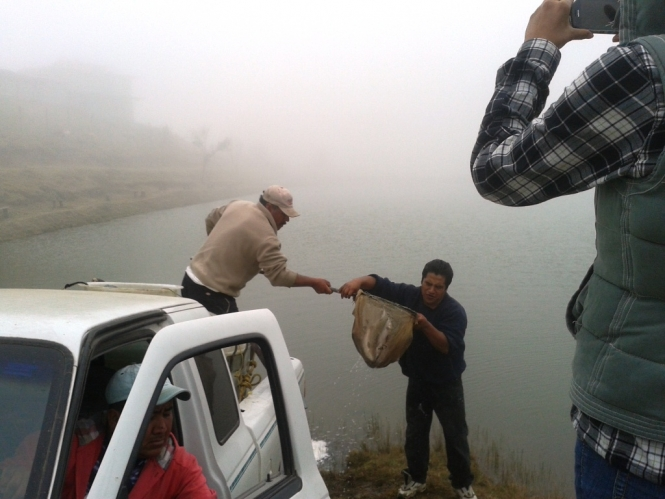 Siembra Serial pesca trucha 2013 Hidalgo